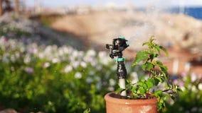 Arrosage automatique de la pelouse avec les fleurs dans le jour ensoleillé chaud, proces d'autowatering, arrosant la pelouse et l clips vidéos