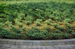 Arrosage d'égouttement Système d'irrigation Images stock
