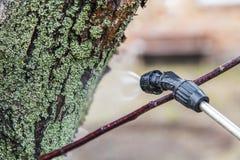 Arrosage des arbres avec du vitriol de fer photo libre de droits