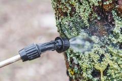 Arrosage des arbres avec du vitriol de fer photographie stock