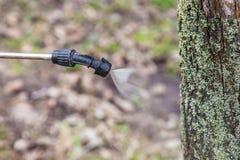 Arrosage des arbres avec du vitriol de fer images libres de droits