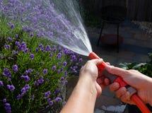 Arrosage du jardin une soirée d'été Photo stock