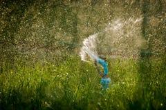 Arrosage fol d'herbe Images libres de droits