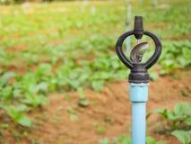 Arroseuse pour des plantations de potager Image libre de droits