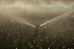 Arroseuses de l'eau sur des cultures photo libre de droits