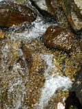Arrosez l'écoulement d'arbres de roches de poissons d'espace libre de montagne de crique de rivière frais photos libres de droits