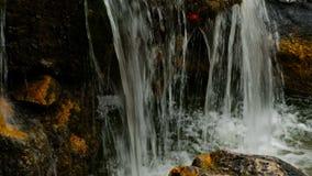 Arrosez la chute dans le petit étang de Boulder a couvert de la mousse banque de vidéos
