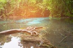 Arrosez le lac dans la forêt profonde tropicale en parc national Images stock