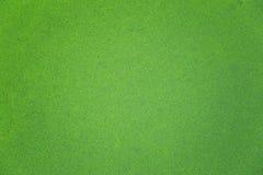 Arrosez le repas, algues de marais, globosa de Wolffia photo stock