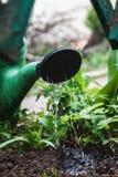 Arrosez le sol de la boîte d'arrosage Plan rapproché, gardenin de concept Images stock