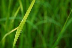 Arrosez les baisses sur l'herbe verte le matin image stock