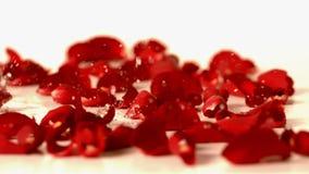 Arrosez les baisses tombant sur les pétales de rose rouges banque de vidéos