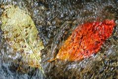 Arrosez les cascades sur une rivière de montagne avec les feuilles d'automne tombées Image stock