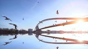Arrosez les oiseaux de paysage de pont de réflexion pilotant le coucher du soleil de mouvement lent banque de vidéos