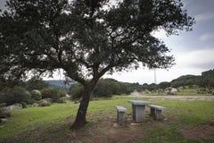 Arrostisca col barbecue le tavole su erba verde nel giorno soleggiato fotografia stock
