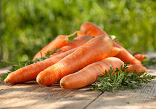 Сarrot vegetable Royalty Free Stock Photo