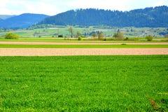 Arround Tusnad, la Transilvania del paesaggio Fotografia Stock