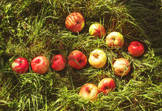 Arrow from apples on grass Stock Photo