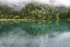 Arrow Bamboo lake i in Jiuzhaigou, China, Asia Stock Images