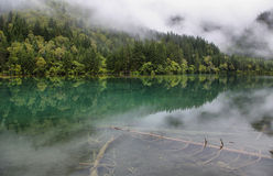 Arrow Bamboo lake i in Jiuzhaigou, China, Asia Stock Photography