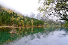 Arrow bamboo lake, Jiuzhaigou, China. Reflection of Arrow Bamboo Lake in Jiuzhaigou, China Stock Image