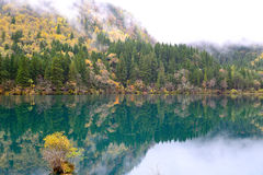 Arrow bamboo lake, Jiuzhaigou, China Royalty Free Stock Photo