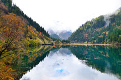 Arrow bamboo lake, Jiuzhaigou, China Royalty Free Stock Photography