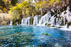 Arrow bamboo waterfall jiuzhaigou scenic Stock Photos