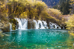 Arrow bamboo waterfall jiuzhaigou scenic Stock Photo