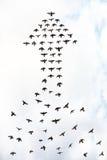 Arrow birds. Flock of birds forming an arrow, abstract success concept Stock Photo