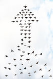 Arrow birds Stock Photo