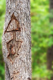 Arrow carved in tree Royalty Free Stock Photography