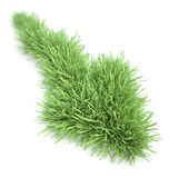 Arrow shaped patch of grass Royalty Free Stock Image