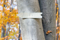 Arrow sign on a tree Royalty Free Stock Images