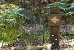 Arrow sign on wooden post. With wild plants blurred on background stock image