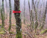 Arrow on the tree. In the woods  - winter time Stock Images