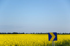 Arrow at yellow field Royalty Free Stock Photography