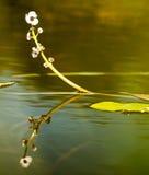 Arrowhead αντανάκλαση Στοκ φωτογραφίες με δικαίωμα ελεύθερης χρήσης