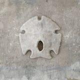 arrowhead θαλασσινό κοχύλι Στοκ Εικόνες