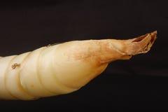 Arrowroot tuber. Stock Image