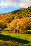 Arrowtown in South Island New Zealand. Stock Photo