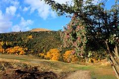 Arrowtown in Zuideneiland Nieuw Zeeland Royalty-vrije Stock Foto