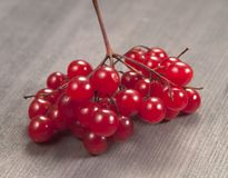 Arrowwood berries Stock Photos