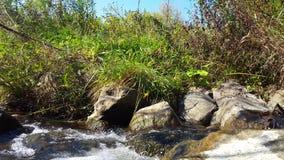 Arroyo claro/Riverlet/corriente del agua de la charla en verano almacen de metraje de vídeo