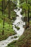 Arroyo de Jezerni en bosque de haya Foto de archivo libre de regalías