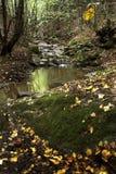 Arroyo de la montaña Imágenes de archivo libres de regalías