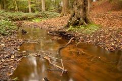 Arroyo del bosque Fotografía de archivo