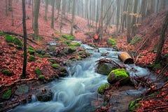 Arroyo del bosque foto de archivo