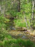 Arroyo del bosque de Zabolchenny en el taiga Foto de archivo libre de regalías