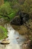 Arroyo en bosque Fotos de archivo libres de regalías